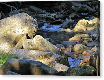 Bear In The River Canvas Print by Kim Ormsby