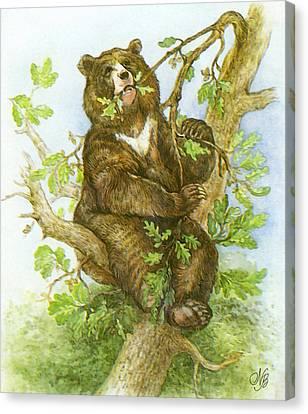 Bear Canvas Print by Natalie Berman