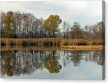 Bear Swamp Mirror Canvas Print