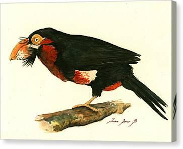 Bearded Barbet Canvas Print by Juan Bosco