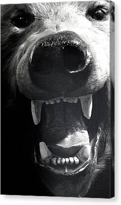 Beared Teeth Canvas Print by Jez C Self