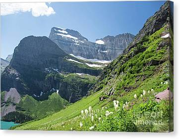Beargrass - Grinnell Glacier Trail - Glacier National Park Canvas Print