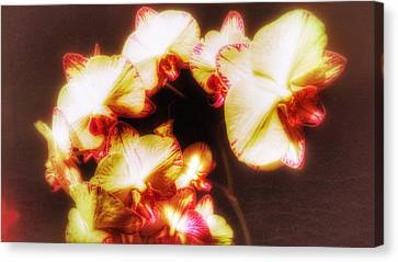Canvas Print featuring the photograph Beautiful Orchid by Isabella F Abbie Shores FRSA