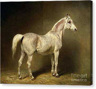 White Horses Canvas Print - Beatrice by Carl Constantin Steffeck