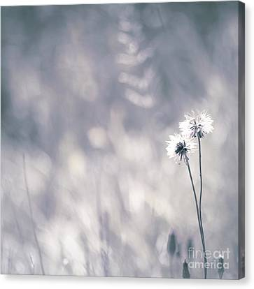 Canvas Print featuring the photograph Beaute Des Champs - 0101 by Variance Collections
