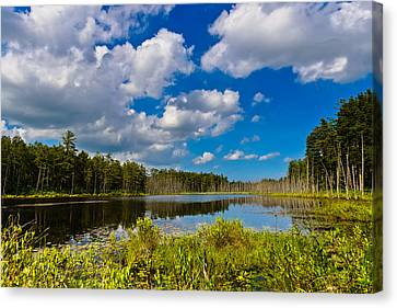 Beautiful Afternoon In The Pine Lands Canvas Print