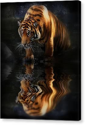 Beautiful Animal Canvas Print by Kym Clarke