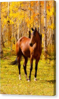 The Lightning Man Canvas Print - Beautiful Autumn Horse by James BO  Insogna