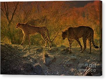 Beautiful Big Cats Of The Living Desert Canvas Print by Sherri's Of Palm Springs