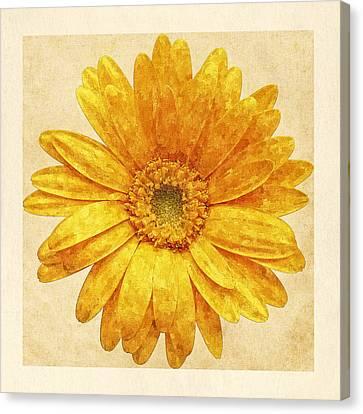 Beautiful Blossom Canvas Print by Anton Kalinichev