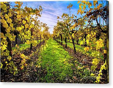 Beautiful Colors On The Vines Canvas Print
