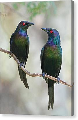 Beautiful Couple Canvas Print by Jacqueline Hammer