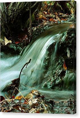 Beautiful Creek Canvas Print by Mario Brenes Simon