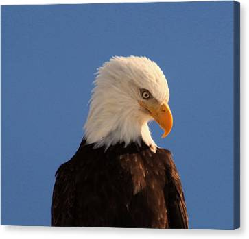 Canvas Print featuring the photograph Beautiful Eagle by Jeff Swan
