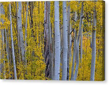 Beautiful Fall Forest Canvas Print by James BO  Insogna