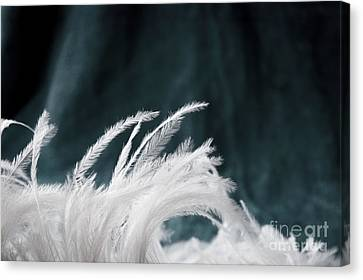 Beautiful Feather Canvas Print