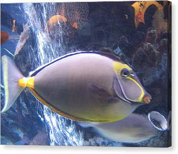 Canvas Print featuring the photograph Beautiful Fish by Suhas Tavkar