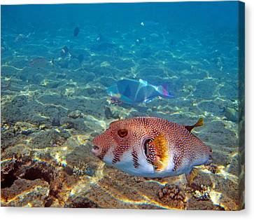 Beautiful Fish. Underwater World.  Canvas Print by Andy Za