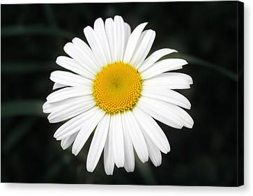 Beautiful Flower Canvas Print by Milena Ilieva