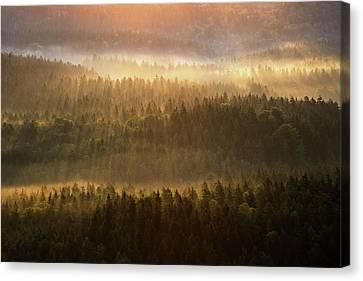Beautiful Foggy Forest During Autumn Sunrise, Saxon Switzerland, Germany Canvas Print