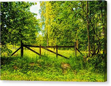 Beautiful Forest  Canvas Print by Tommytechno Sweden