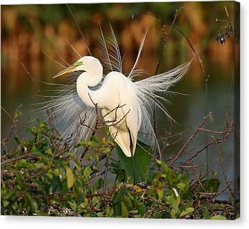 Beautiful Great White Egret At Dusk Canvas Print by Sabrina L Ryan