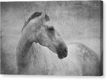 Beautiful Grey Horse In Textured Black And White Canvas Print by Michelle Wrighton
