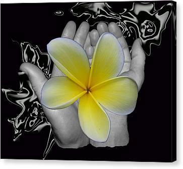 Beautiful Hands Canvas Print by Amanda Vouglas