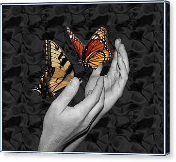 Beautiful Hands Two Canvas Print by Amanda Vouglas
