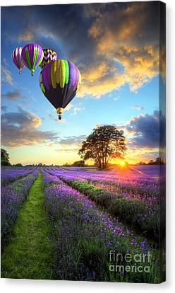 Beautiful Image Of Stunning Sunset With Atmospheric Clouds And Sky Over Vibrant Ripe Lavender Fields Canvas Print by Caio Caldas