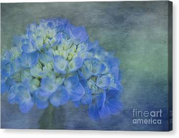 Beautiful In Blue Canvas Print