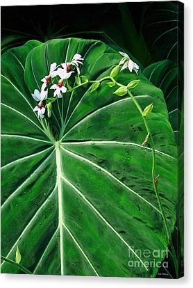 Beautiful Ivory Veins Of A Philodendron Canvas Print by Sue Melvin