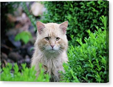 Canvas Print featuring the photograph Beautiful Kitty by Trina Ansel