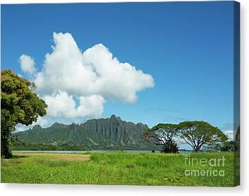 Beautiful Kualoa Ridge Canvas Print by Charmian Vistaunet