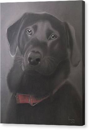 Beautiful Labrador Retriever Canvas Print