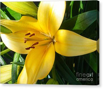 Beautiful Lily I Canvas Print by Sonya Chalmers