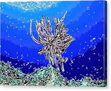 Beautiful Marine Plants 1 Canvas Print by Lanjee Chee