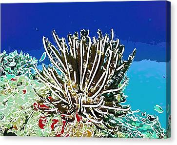Beautiful Marine Plants 11 Canvas Print by Lanjee Chee
