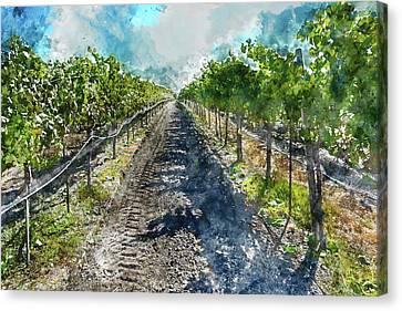 Beautiful Napa Valley Vineyard Canvas Print