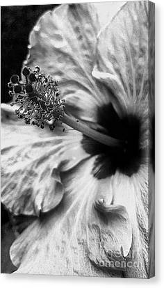Beautiful On The Inside Canvas Print