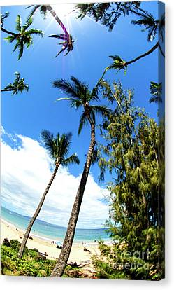 Canvas Print featuring the photograph Beautiful Palms Of Maui 17 by Micah May