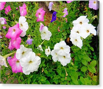 Beautiful Petunia Flower 5 Canvas Print by Lanjee Chee