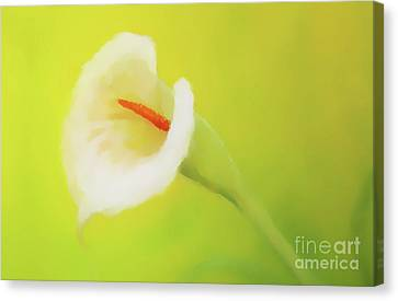 Beautiful Radiant Cala Flower On Decorative Background, Graphic From Painting. Canvas Print