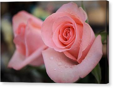 Beautiful Roses Canvas Print by Lilia D