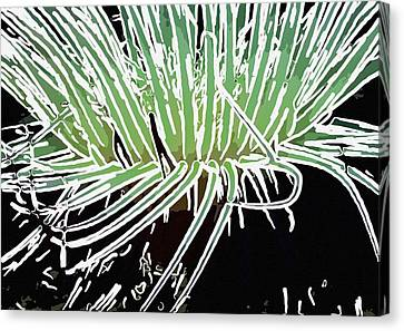 Beautiful Sea Anemone 3 Canvas Print
