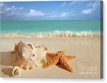 Beautiful Shell On Sand Canvas Print