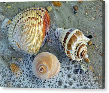 Beautiful Shells In The Surf Canvas Print by D Hackett