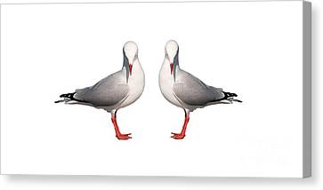 Beautiful Silver Gull. Original And Exclusive Photo Art. Canvas Print by Geoff Childs
