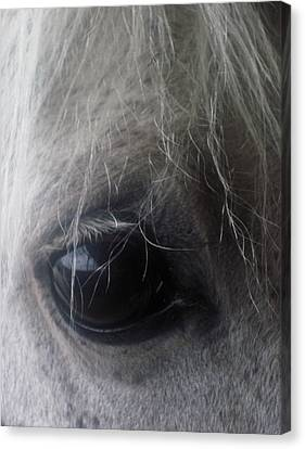 Canvas Print featuring the photograph Beautiful Spirit by Cheryl Perin
