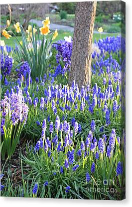 Beautiful Spring Day Canvas Print by Carol Groenen